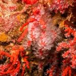 Mediterranean coral reef.