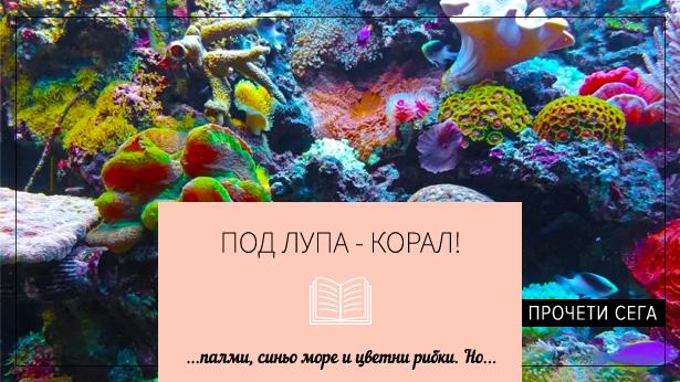 Blog_21_w23-pod-lupa-koral-615